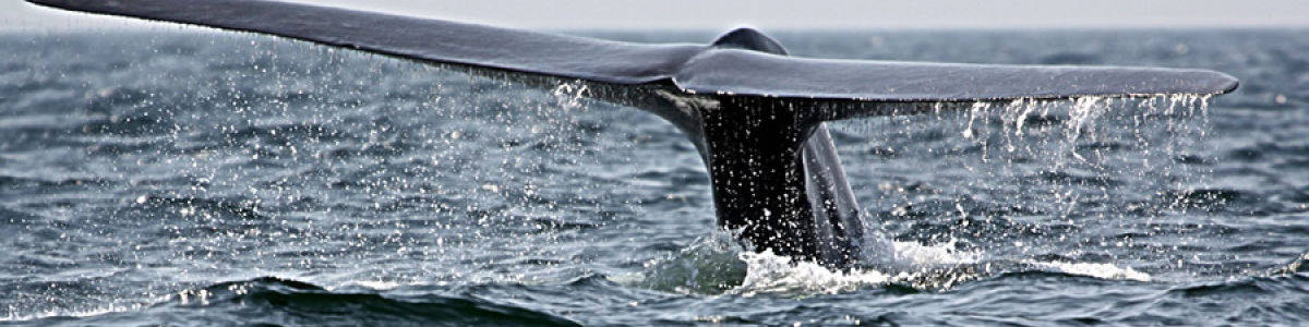 Headline for Best Whale Watching Sites in Sri Lanka- Discover Sri Lanka's Top Whale Watching Destinations