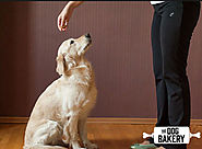 Teach your dog to sit, stay or roll over in under 30 minutes