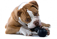 10 Durable, Eco-Friendly Dog Toys for The Toughest Chewers