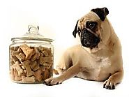 Dog Treats 101: What Kind, When, and How Many