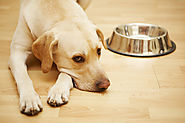 5 Signs Your Dog May Be Allergic to Grains | Best Grain Free Dog Food