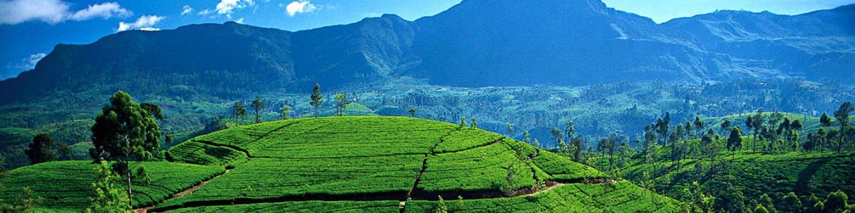 Headline for Places to Discover the Rustic Beauty of Sri Lanka – An Island of Many Allures