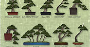 Bonsai tree species and care guides.