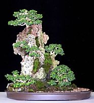 The Ancient Art of Bonsai: Bonsai Care: What to consider when looking after your plants.