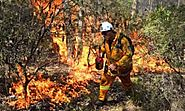 Burn-offs have almost no effect on bushfire risks, Tasmania study finds | Australia news | The Guardian