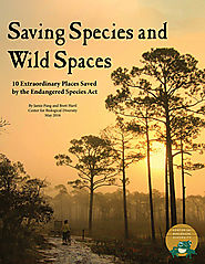 New Report Highlights 10 Wild Places Saved by Endangered Species Protections
