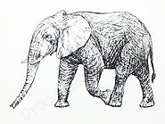 How to Draw An Elephant: In A Few Easy Steps with Pictures