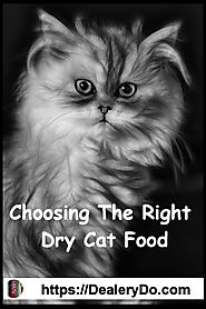 Choosing The Right Dry Cat Food