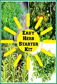 Easy Vegetable Herb Garden Kit Housewarming Gift • Seasons Charm