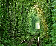 A Tunnel Made of Leaves: Tunnel of Love