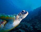 Protect Marine Turtles in the... - The Petition Site