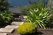 Garden Maintenance Services at Roalan Enterprises