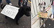 28 Very Good Dogs Who Went To The March For Science