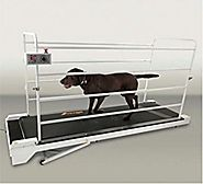 Domestic Pet Dog Treadmills Gopet Treadwheel For Dogs Home