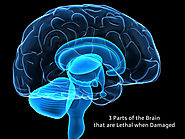3 Parts of the Brain that are Lethal when Damaged