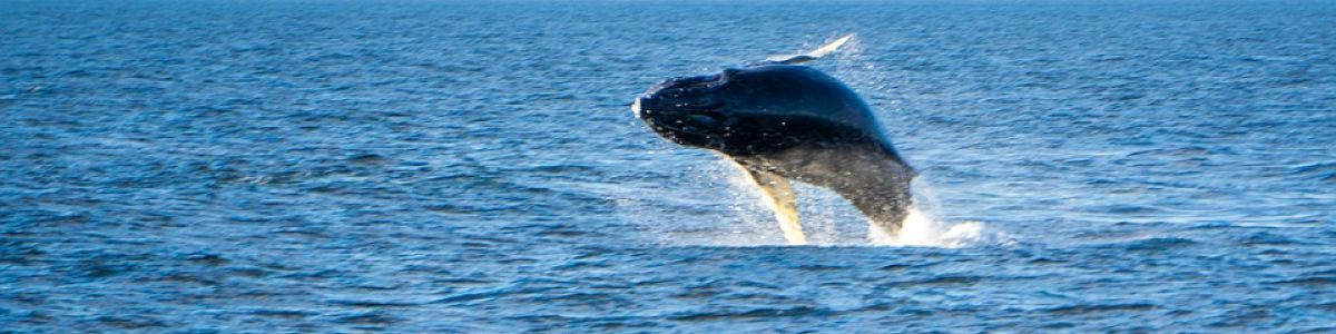 Headline for Types of Whales Around Maldives – A Whale of a Time!