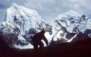 'Yeti lives': Abominable Snowman is 'part polar bear and still roams the Himalayas'