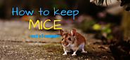 How To Keep Mice Out Of Camper » Camping Heaven