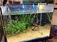 Aquarium in kammanahalli, Bangalore, Aquarium Fish Dealers in Kammanahalli