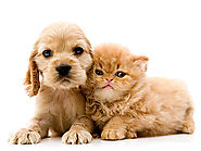 Pets for allergy and asthma sufferers