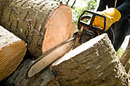 THE RELIABLE TREE REMOVAL CONTRACTOR YOU'RE LOOKING FOR