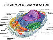 Diagram the structure of a cell