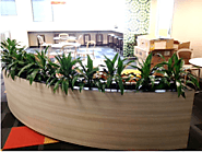 Office Plant Hire Melbourne | Inscape Indoor Plant Hire