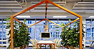 How can Office plant hire improve the office environment?