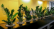 How Office plant hire Melbourne expert make your workplace greener?
