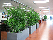 What elements does office plant hire Melbourne Experts considering?