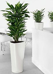 Office plant hire: get the best plants for your workspace