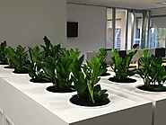 How Office Plant Hire Melbourne can transform your office and their benefits