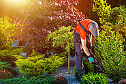 More About Our Landscaping Company in Lake Elsinore, CA, 92531