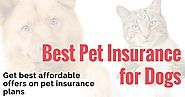 Best Pet Insurance for Dogs