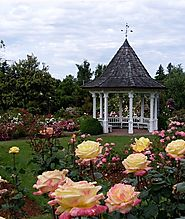 Expert Landscapers on Planting Roses: Things to Keep in Mind
