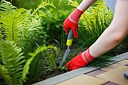 What Lawn Care Service Do to Maintain the Beauty of Your Lawn