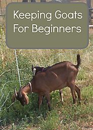Raising Goats For Beginners What You Need To Know