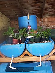 Aquaponics system we build from scratch