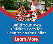 Learn to build a great chicken coop for your Bettys to lay their eggs in and be protected from preditors.