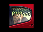 Pet Travel Safety With Canine Auto