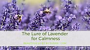 The Lure of Lavender to Enhance our Lives ·