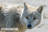 U.S. Congress Rejects More than a Dozen Provisions to Weaken  the Endangered Species Act