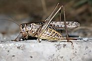Buy Crickets Online to Give Your Reptile Pet Great Health Benefits