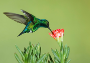 Why Google's New Hummingbird Algorithm is Good News for Serious Content Creators