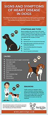 Understanding the Symptoms of CHF in Dogs