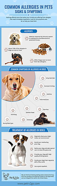 Find Fast Allergy Treatment for Your Dogs