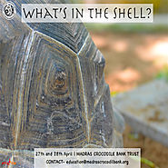 What's in the Shell? | Online Bookings via entryeticket