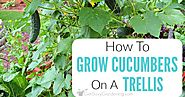 Growing Cucumbers On A Trellis: How To Grow Cucumbers Vertically