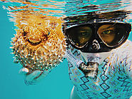 Snorkeling with tropical beauty. Amatuers and professional divers alike take advantage of crystal blue waters, amazin...