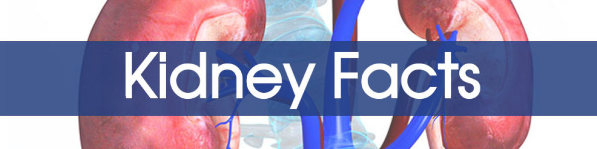 Headline for What is a Kidney Disease? Kidney Failure: Signs, Symptoms, Causes & Stages